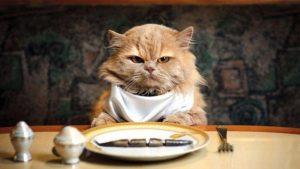 happycat2